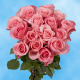 50 Stems of Bright Pink, High and Bonita Roses                                                              For Delivery to Utah