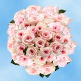 200 Assorted Pink Roses
