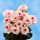 50 Stems of Light Pink Roses                                                              For Delivery to Massachusetts