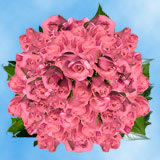 200 Stems of Light Pink, Valentine's Day Roses