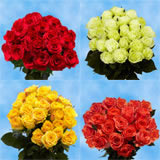 100 Stems of Roses 50 Red & 50 Two Colors