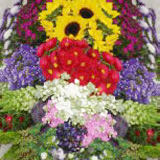 200 Stems of Your Choice Specialty Assorted  Flowers & Fillers.