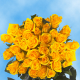 75 X Long Stems of Yellow, Valentine's Day Roses                                                              For Delivery to Nebraska