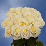50 Stems of White with Pale Yellow Center, Blizzard Roses