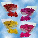 3500 Your Choice of Color Rose Petals