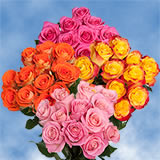 16 Dozen Your Choice of Color Roses