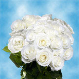75 X Long Stems of White, Valentine's Day Roses                                                              For Delivery to Indiana