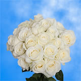 50 Stems of Pure White Roses