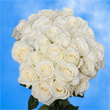 75 X Long Stems of Pure White Roses