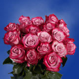 50 Stems of Deep Purple Valentine's Day Roses                                                              For Delivery to South_Dakota