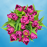 30 Stems of Purple Tulips Flowers