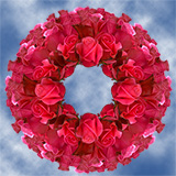 250 Stems of Red Coral Fuchsia, Malena Roses                                                              For Delivery to Florida