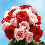 50 Stems of Roses: 25 Red and 25 Pink
