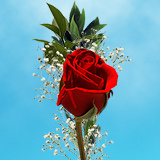 35 Single Red Rose Bouquet with Fillers
