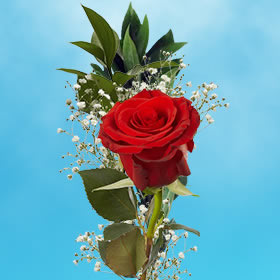 Single Red Roses and Fillers Choose Your Quantity From 25 - 70 Roses