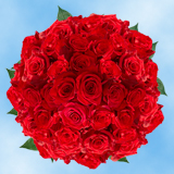200 Assorted Red Roses