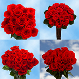 100 Assorted Red Roses
