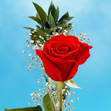 25 Single Red Rose Bouquet with Fillers