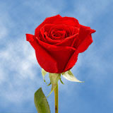 60 Single Red Rose Bouquet                                                              For Delivery to Kentucky