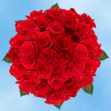 100 Stems of Bright Red, Valentine's Day Roses                                                              For Delivery to Pennsylvania