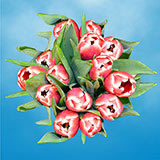 60 Valentine's Day Red & White Tulips