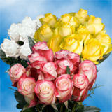 3 Dozen Assorted Colors of Roses