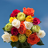 200 Stems of Assorted Colors Roses
