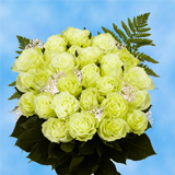 24 Stems of Green Roses with Fillers