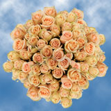 150 X Long Stems of Peach, High and Arena Roses