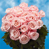 50 Pink Mother's Day Roses