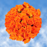 100 Stems of Bright Orange, Miracle Roses