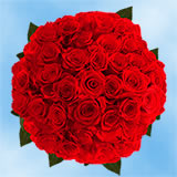 100 Red Next Day Roses