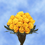 50 Stems of Dark Yellow, Conga Roses