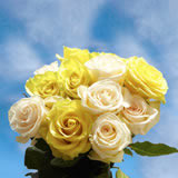 50 Stems of Roses: 25 Yellow and 25 White                                                              For Delivery to Oklahoma