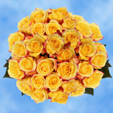 100 Stems of Bright Yellow with Red, Tressor 2000 Roses