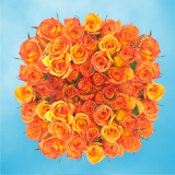 100 Stems of Dark Orange, Amber Roses                                                              For Delivery to Florida