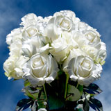 75  X Long Stems of Pure White, Akito Roses