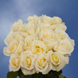 75  X Long Stems of White with Pale Yellow Center, Blizzard Roses