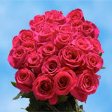 75 X Long Stems of Hot Pink, Valentine's Day Roses                                                              For Delivery to Washington