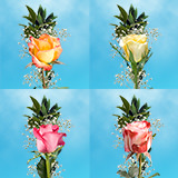 35 Single Assorted Color Rose Bouquet with Fillers