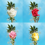 70 Single Assorted Color Rose Bouquet with Fillers