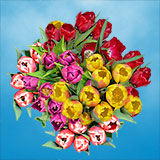 30 Stems of Assorted Color Tulips