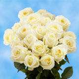 12 Stems of Ivory Roses