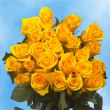 50 Stems of Yellow, Valentine's Day Roses