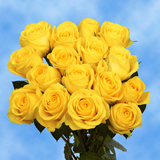 50 Stems of Pure Yellow, Latina Roses