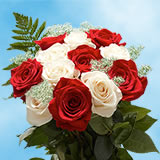 8 Dozens Red and White Roses