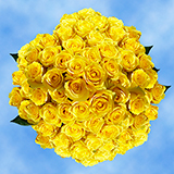 150 X Long Stems of Yellow Bikini Roses