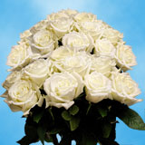 50 Stems of White with a Touch of Green, Escimo Roses