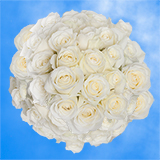 150 X Long Stems of Pure White Roses