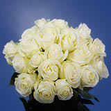 50 Stems of White Wedding Roses                                                              For Delivery to Pennsylvania